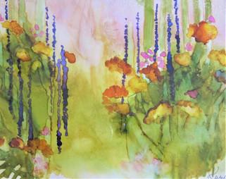 wildflowers on the colorado plains