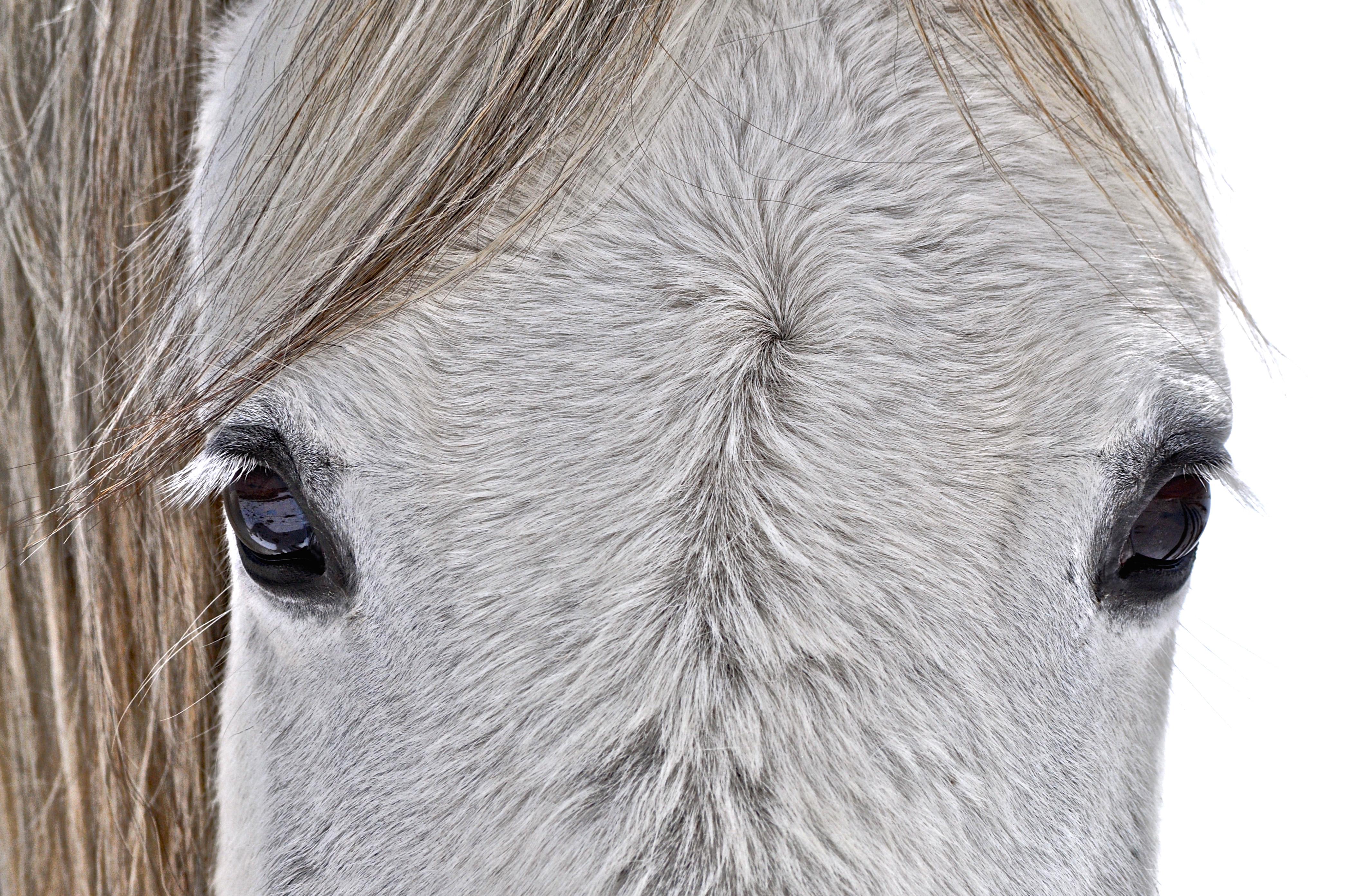 BLM White Horse