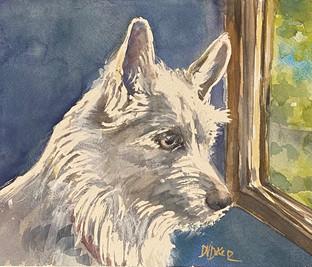 Pet Portrait DD