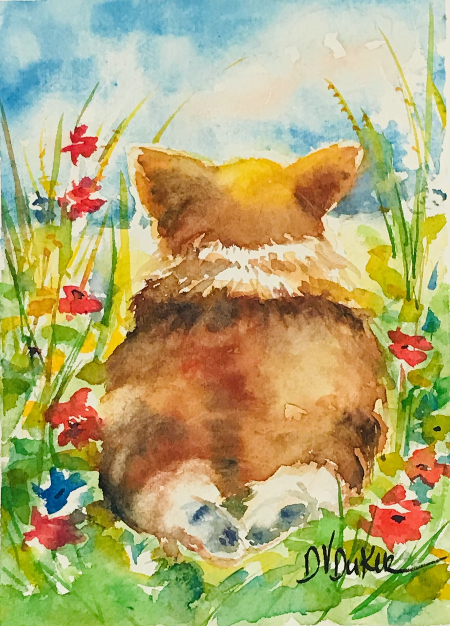 Corgi Day Dreams