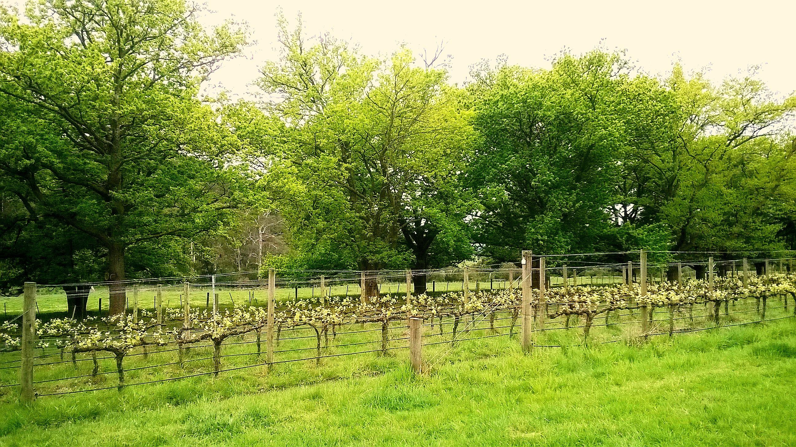 grapevines trail1.jpg
