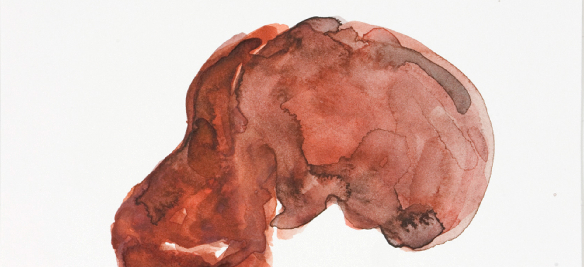 'Skull series (Taung)', 2009, watercolour on paper, 12.5 x 20 cm