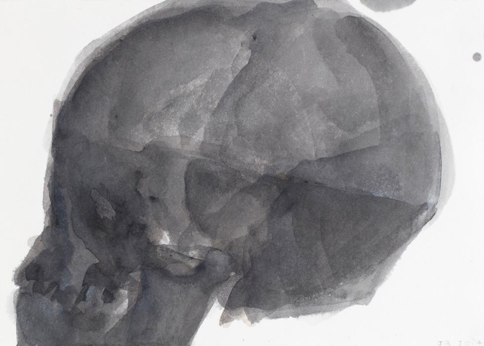 'Skull Series', 2017, watercolour on paper, 19 x 33 cm