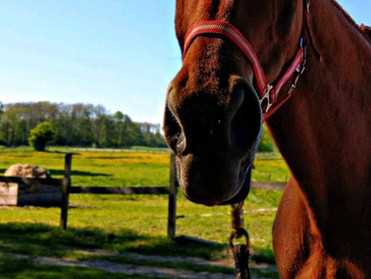 Pferde Anatomie Kurs