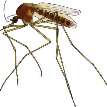 Mosquito-color1.jpg