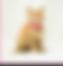 sahiplendirme için kedi ilanlari gösteren ikinci küçük fotoğraf