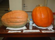 大きなかぼちゃが出来ました!(^^)!ハロウィンです。