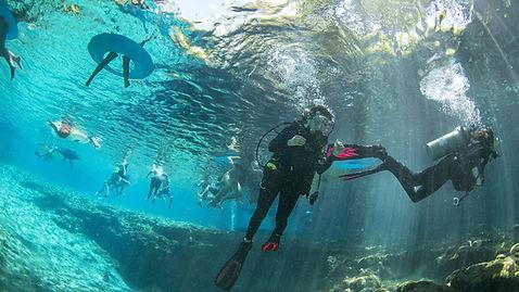 Diving Ginnie.jpg