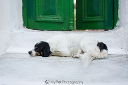Home Sweet Home - Pet Photography