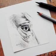 Sonia Ansiaux - crayon aquarellable et graphite sur papier Dorée - 10x10