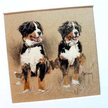 Sonia Ansiaux - Chiots - crayon aquarellable, fusain, graphite et acrylique sur papier Daler & Rowney - 12x12