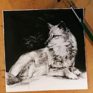 Sonia Ansiaux - La louve - encre de Chine sur papier Arches satiné - 15x15
