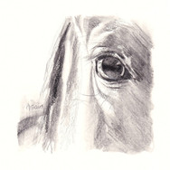 Sonia Ansiaux - crayon aquarellable, graphite et crayon gras sur papier Dorée - 10x10