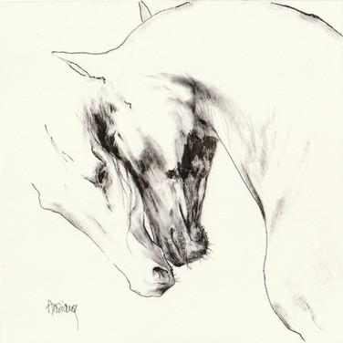 Sonia Ansiaux - Tendresse équine - encre de chine sur papier Arches satiné - 15x15