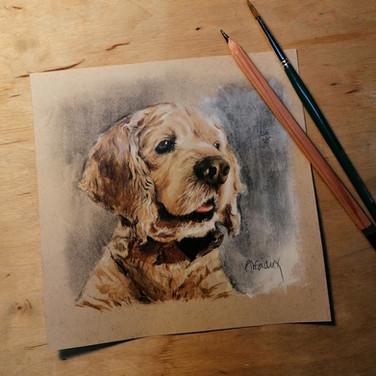 Sonia Ansiaux - Milord - crayon gras et acrylique sur papier Daler & Rowney - 12x12