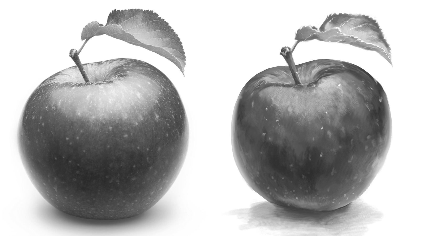 Left: photo reference Right: Digitally drawn study