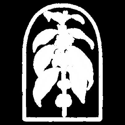 PLANTA WHITE PNG.png