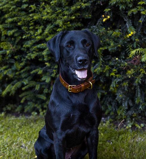 Dog Collar.jpg