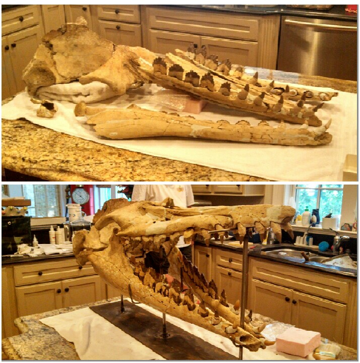 Whale Skull (before and after)