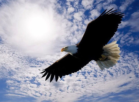 Rise Above and Soar