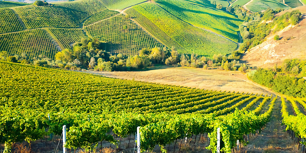 Wine showcase: Bordeaux 2nd tasting
