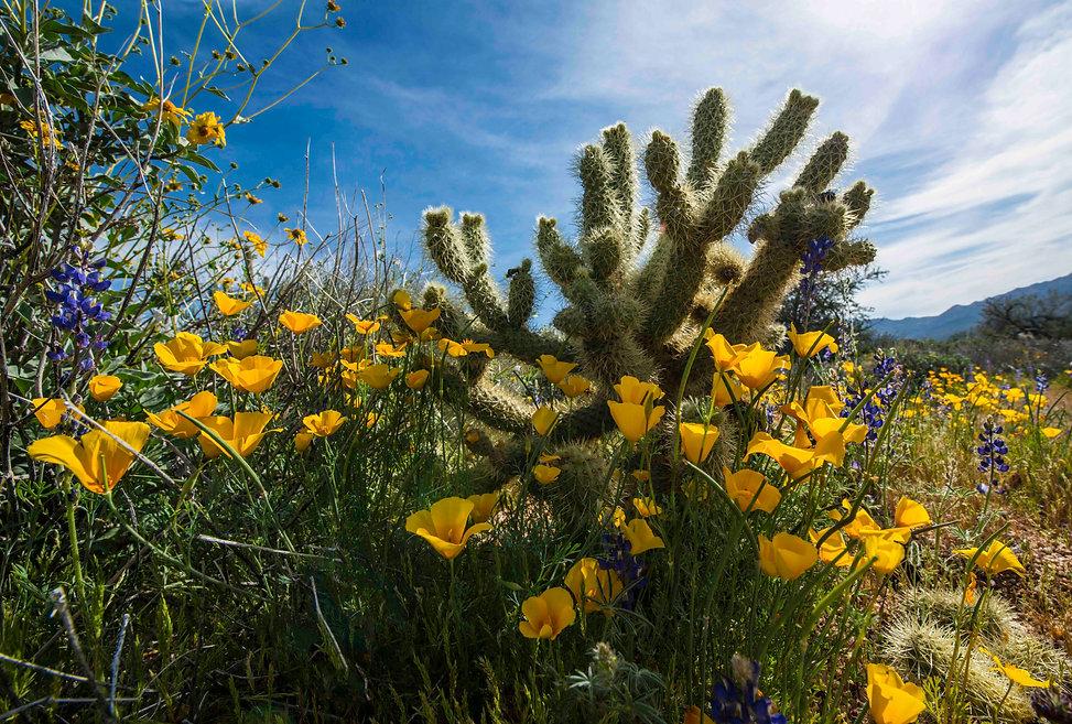 Cactus & wildflowers