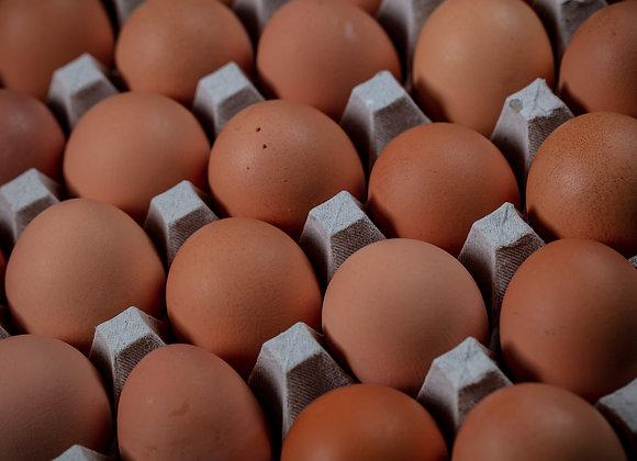 Cage Free Eggs Lake Meadows