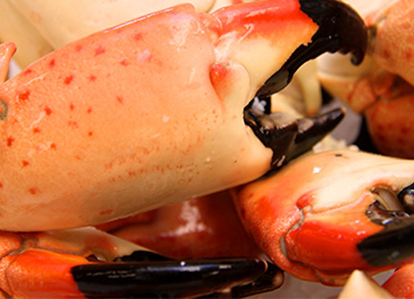 Key Largo Colossal Stone Crab Claws 3lb