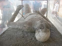 Petrified Human