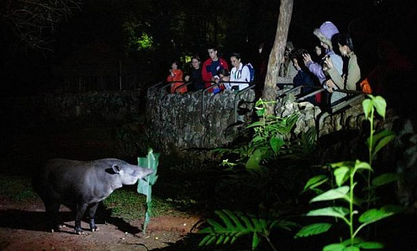 A NIGHT AT THE ZOO: have you ever thought about visiting the animals at night? Learn all about this