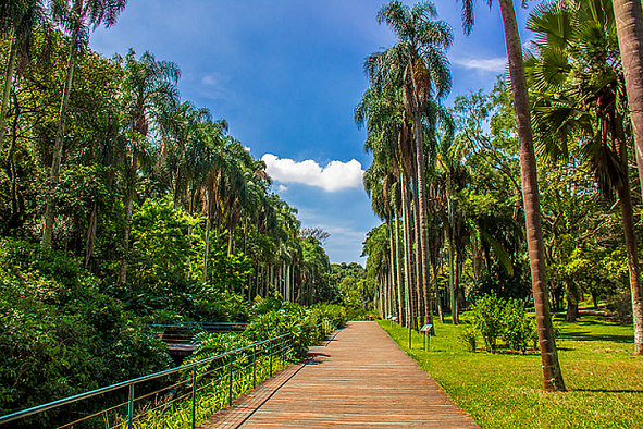 BOTANICAL GARDEN OF SÃO PAULO: a must see and a true oasis of peace and quiet.