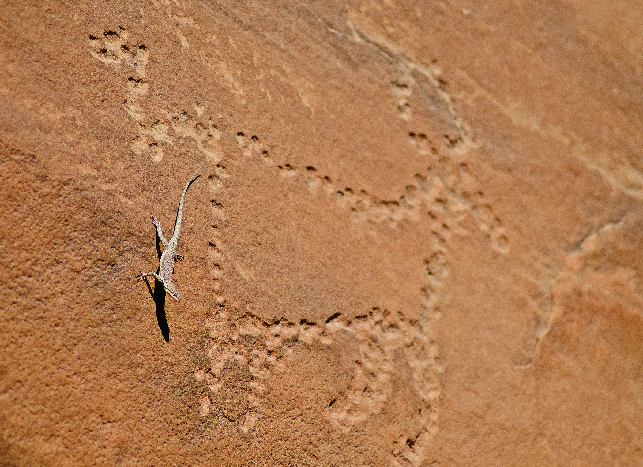 Lizard on pictograph