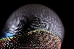 Ojo Escarabajo tigre Pentacomia