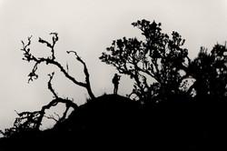 Fotografo - Ecuador