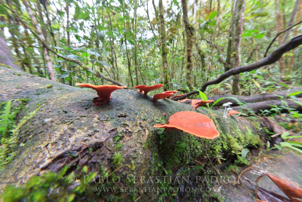 Fungi 4 - Ecuador
