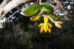 Orchidaceae 10 -  Ecuador