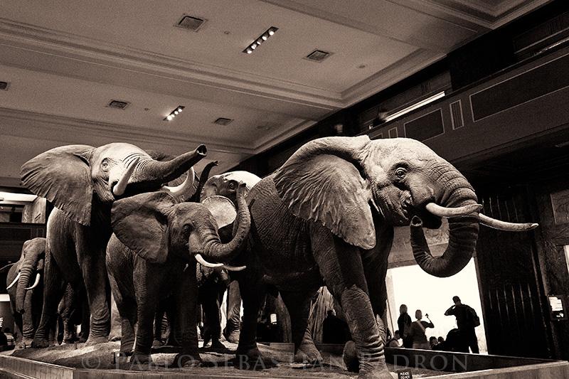 AMNH - USA