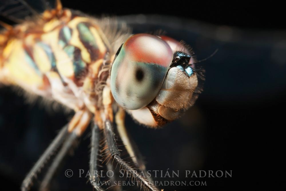 Dragonfly 3 Gainesville FL.
