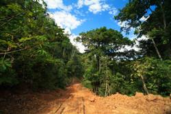 Bolivia Selva