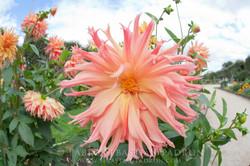 Flower - France