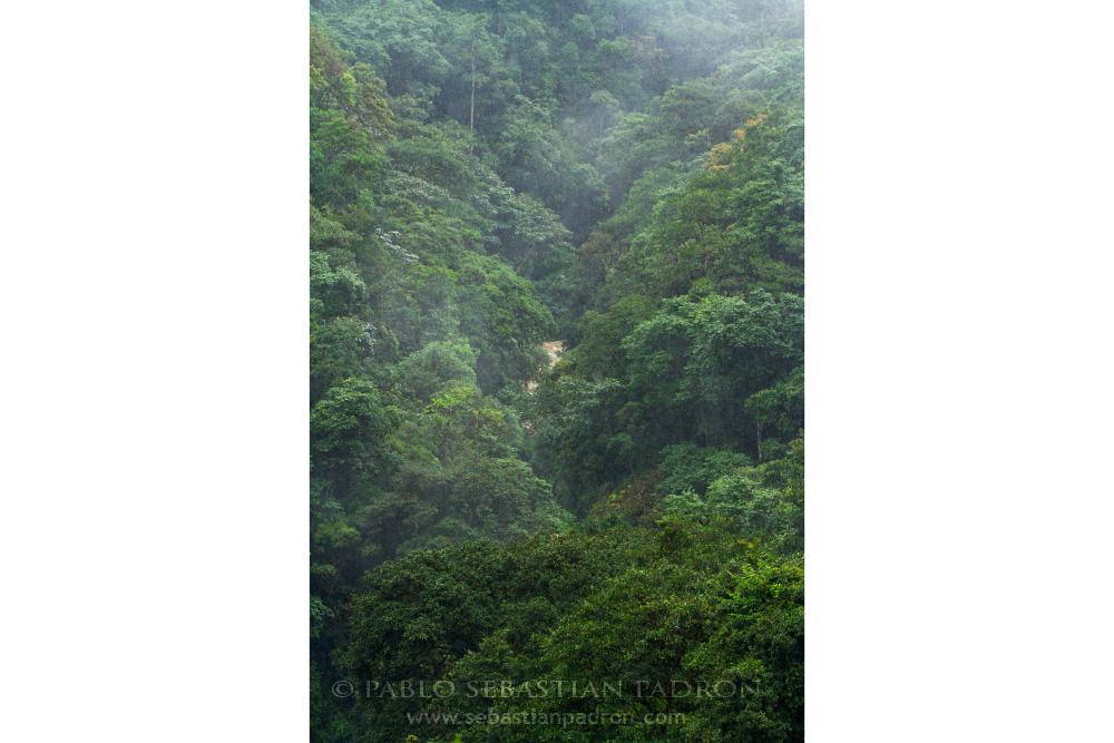 Amazonia  - Ecuador