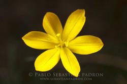 Flower 2 - Ecuador-