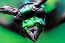 Cerambycidae 3 - Ecuador