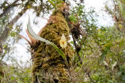Orchidaceae 3 -  Ecuador