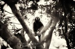 Mono aullador - Ecuador
