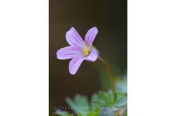 Flower 10 - Ecuador