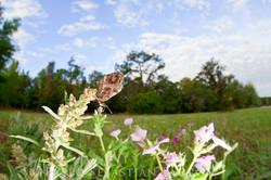 Gainesville_20120324_0044384.jpg