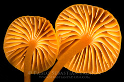 Fungi  2 - Ecuador