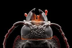 Cerambycidae 4 - Ecuador