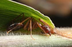 Ant Ecuador
